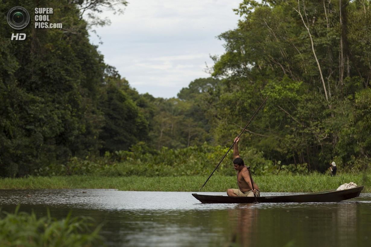 симметричная, меня кто водится в амазонке фото потому