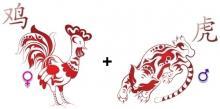 Брак между тигром и петухом. Тигр и Петух: совместимость в любви, браке по гороскопу. Любовь и брак