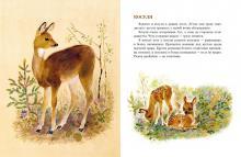 Сладков разноцветная земля читать. Рассказы про зверей для школьников. Николай Сладков «Звериная сауна»
