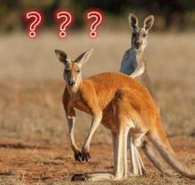 Особенности национальной австралийской кухни