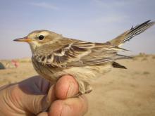 Как называют ученых изучающих птиц. Игра-соревнование знатоки птиц. Какими качествами должны обладать люди этой профессии