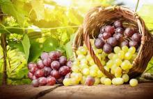 Если каждый день есть виноград. Полезен ли виноград. Против холестерина, бактерий и раковых опухолей