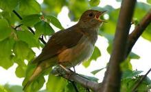 Рассказать детям о перелетных птицах. Сочинение на тему: Птицы прилетели!. Речевое упражнение «Назови ласково»