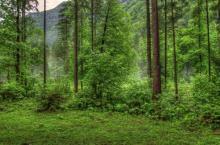 Объекты живой природы. Интеллектуальная игра Путешествие в природу (2—3-й классы)