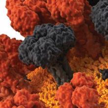 Какие бактерии являются возбудителями заболеваний растений, животных и человека