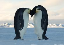 Обнаруженное в антарктиде шокировало не только ученых. Обнаруженное в антарктиде шокировало не только ученых Обнаружено в антарктике не только ученых
