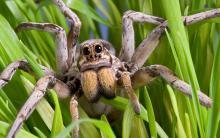 Кто такой паук: насекомое либо нет