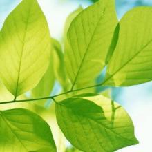 Что относится к деревьям. Список лиственных деревьев и их наименования, примеры. Виды деревьев России