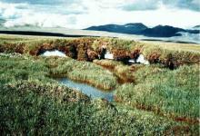 Растительность тундры, виды растений и животных и охрана животных тундры