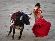 Быки и красная тряпка, использование агрессивного нрава в бойцовских целях