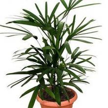Подборка полезных растений для дома, которые насытят кислородом пространство